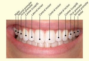 More teeth detail